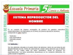 Modelo de la Ficha de Sistema Reproductor del Hombre para Quinto de Primaria