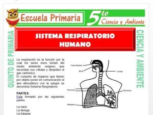 Modelo de la Ficha de Sistema Respiratorio Humano para Quinto de Primaria