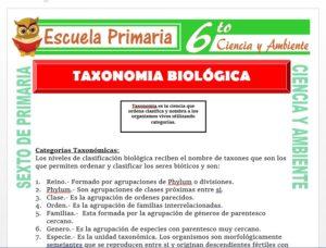 Modelo de la Ficha de Taxonomía Biológica para Sexto de Primaria