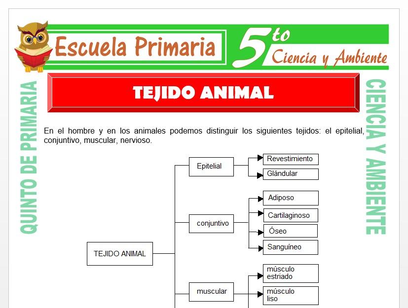Modelo de la Ficha de Tejido Animal para Quinto de Primaria