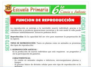 Modelo de la Ficha de Tipos de Reproducción para Sexto de Primaria