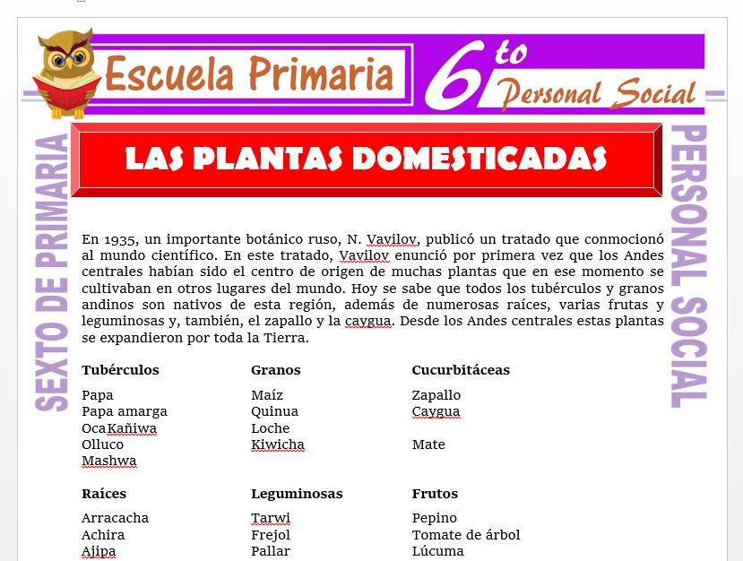 Modelo de la Ficha de Las Plantas Domesticadas    para Sexto de Primaria