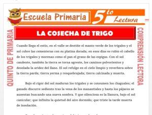 Modelo de la Ficha de La Cosecha de Trigo para Quinto de Primaria