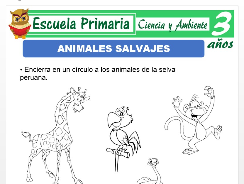 Los animales salvajes para Niños de 3 Años