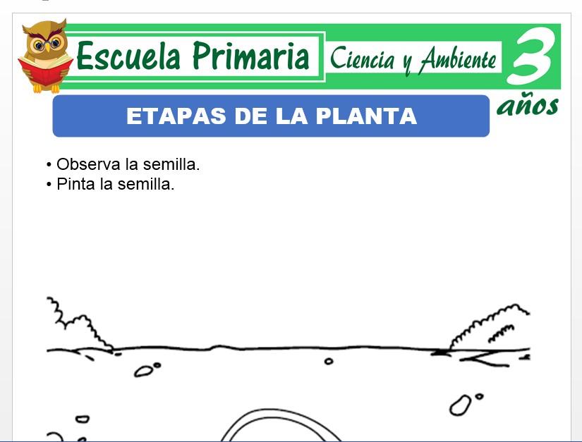 Modelo de la Ficha de Etapas de vida de las plantas para Niños de 3 Años