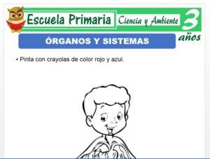 Modelo de la Ficha de Órganos y sistemas para Niños de 3 Años