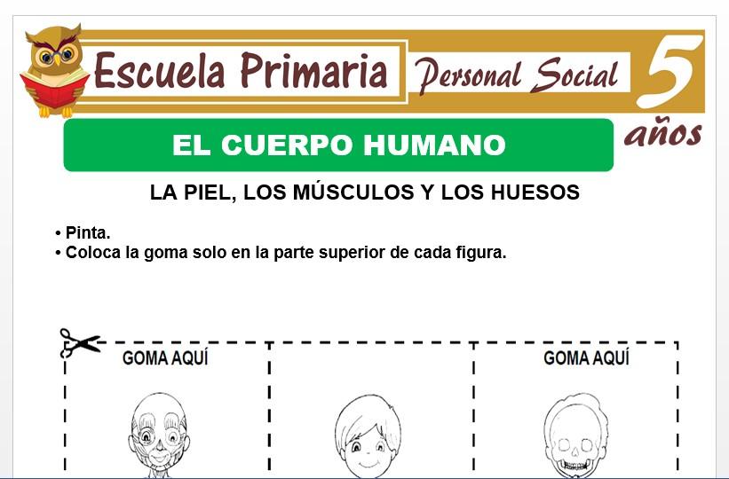 Modelo de la Ficha de El cuerpo humano para Niños de 5 Años