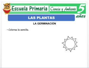 Modelo de la Ficha de Las plantas para Niños de 5 Años