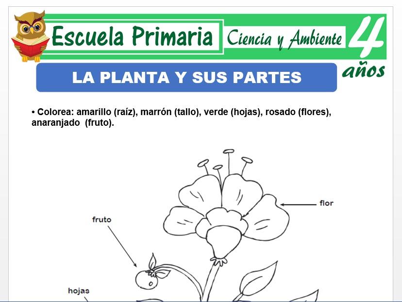 Modelo de la Ficha de Las plantas y sus partes para Niños de 4 Años