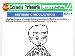 Modelo de la Ficha de Sistema circulatorio para Niños de 4 Años