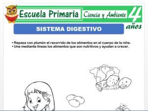 Modelo de la Ficha de Sistema digestivo para Niños de 4 Años