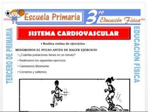 Modelo de la Ficha de Sistema Cardiovascular para Tercero de Primaria