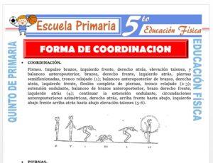 Modelo de la Ficha de Formas de Coordinación para Quinto de Primaria
