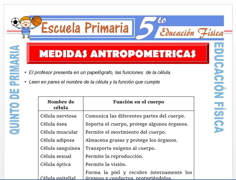 Modelo de la Ficha de Medidas Antropométricas para Quinto de Primaria